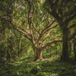 Skoventreprise hjælper dig til at frigive tid til andre opgaver